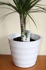 Quality White Rigid Plastic Plant Pot Cover - Diameter 23.5cms