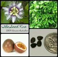 20+ ORGANIC PANAMA PASSIONFRUIT SEEDS (Passiflora edulis) High Yeilding