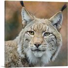 ARTCANVAS Lynx In Forest Home Decor Square Canvas Art Print