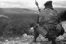 Guerre d'Algérie -  Para du 14° RCP avec FLG - Djebel M'Zouzia  le 25/02/1958