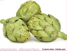 Artischocke grün 10 Semillas PERENNE cocina mediterránea sano Verdura fina