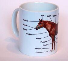 Horse Anatomy / Equestrian Equine  Gift Mug