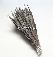 Free shipping 10pcs pretty 10-12 inch /25-30 cm natural pheasant tail feathers