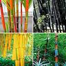 100 Stücke Phyllostachys Pubescens Moso Bambus Samen Gartenpflanzen Schwarz I5L4