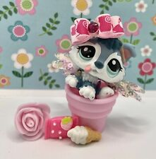 Authentic Littlest Pet Shop # 2036 Gray Silver White Husky Puppy Blue Eyes