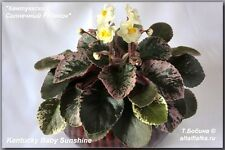 African Violet @Kentucky Baby Sunshine@YELLOW mini LEAF@