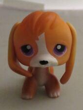 Littlest Pet Shop � Lps � Rare orange and white beagle 301
