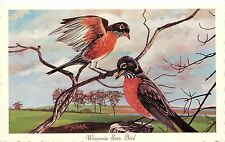 Vintage Art Postcard A/S Ken Haag Wisconsin State Bird American Robin Unposted