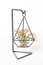 tillandsia plant gift, diamond metal hanger with plant  as one set,USA free ship