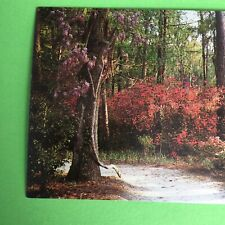 Cypress Gardens North of Charleston S.C. Unposted Postcard South Carolina
