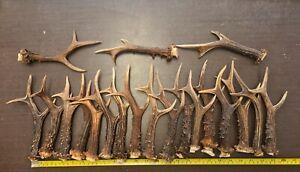 Lot of Over 1,5 Kg Nice Brown Roe Deer Antlers For Knife Handles Crafting # 5972