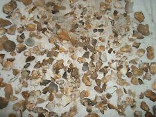 Rock Stone Geode Crystal Project Discovery Gift Kid Classroom Collect USA Seller
