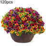 120Pcs Mixed Gloxinia Calibrachoa Petunia Flower Seeds Garden Yard Bonsai Plants
