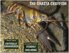 "The Shasta Crayfish, Endangered Species reminder by ""PostcardsTo SaveThePlanet"""