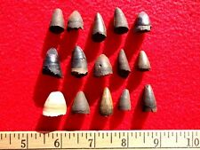 *BULK PRICE* ALLIGATOR TEETH FLORIDA FOSSILS FOSSIL TOOTH JAW BONE BONES GATOR