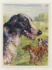 N°142 RUSSISCHE WINDHUND BARSOI BORSOI CARD DOGS CHIENS ANNEES IMAGE50/60