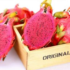 1 Pack 200 Red Pitaya Seeds Dragon Fruit Seed Pitaya fruit Seed Organic S054