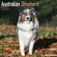 Australian Shepherd Calendar 2020 Premium Dog Breed Calendars