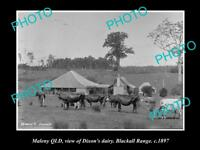 OLD LARGE HISTORIC PHOTO OF MALENY QLD, VIEW OF DIXONS DAIRY BLACKALL RANGE 1897