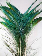 Peacock SWORDS short  per 2 DOZEN