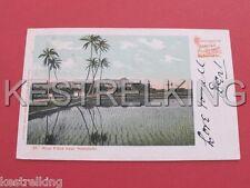 Hawaii Rice Field near Honolulu US Postcard Postally used to South Australia