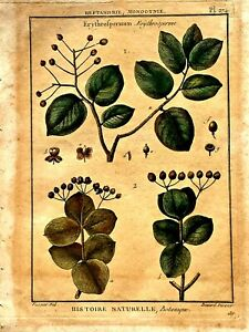 ANTIQUE 18th C BOTANICAL H/COLORED ENGRAVING FROM ENCYCLOPEDIA BERARD DIREXIT