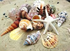 Starfish and Mixed Medium Shells (13 Shells) Sea Shells, Beach Seashells