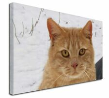 More details for pretty ginger cat x-large 30