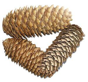 Fichtenzapfen natur 1 kg ca. 50 St. von dkWaldgut  Tannenzapfen Größe etwa 10 cm