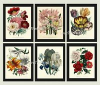 Unframed Botanical Print Set of 6 Antique Peony Tulip Lily Flowers Home Wall Art
