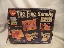 THE FIVE SENSES MODEL KITS LEVEL 2 LINDBERG 1992 SMELL TOUCH TASTE HEARING SIGHT