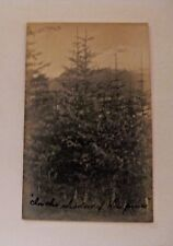 ANTIQUE IN THE SHADOW OF THE PINES WOODS TIMBER LOGGING POSTCARD