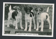 Smooth Fox Terrier Puppies of series Dogs by Senior Service Cigarettes card #37
