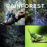 NATURAL SOUNDS OF THE RAINFOREST CD, EXOTIC JUNGLE, & MEDITATION