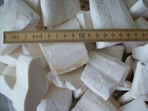 1 kg Sepia Stücke sehr groß Sepiaschale Kalzium Sepiaschalen 1A Qualität