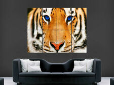 TIGER BLUE EYES ART GIANT WALL POSTER  PICTURE PRINT LARGE
