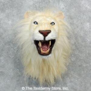 #18296 E+   Reproduction African Lion Shoulder Taxidermy Head Mount - Faux Safar