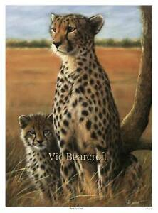 'First Time Out'. Limited Edition Cheetah Print.