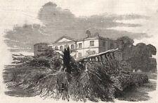 Cedar colpiti da un fulmine, a Henley-upon-Thames. Oxfordshire, STAMPA ANTICA, 1852