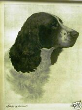 BERT COBB Wagstaff SPRINGER SPANIEL 1931 Print Matted