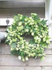 100+ COMMON BEER HOPS SEEDS (Humulus lupulus) Home Brew Perennial Vine Medicinal