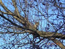 SPONSOR TREE CLIMBING CATS KITTEN RECEIVE COLOR PHOTO CAT RESCUE DONATE