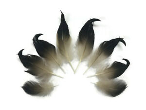 10 Pieces -Natural Mallard Drake Black Curly Tail Feather Craft Fly Tying Supply