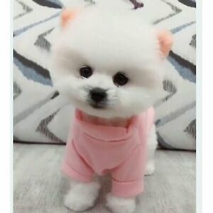 Simulated Dog Dressing Pomeranian Doll Plush Toys Children's Birthday Present #7