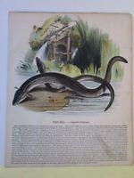 Vintage Print,EEL,Society Christian Knowledge,c1857