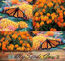 (50) Butterflyweed Milkweed, Asclepias tuberosa, Seeds - Clustered orange flower