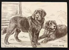 Original 1934 Dog Print / Bookplate - TIBETAN MASTIFF,  Nina Scott Langley