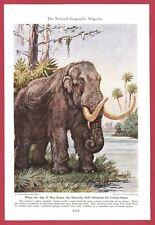 1942 Magazine Illustration by Charles R Knight ~ MASTODON Prehistoric Age of Man