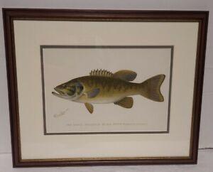 Vintage Framed Fish Print. Small Mouthed Black Bass. Artist Denton. NR