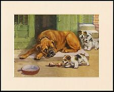 AS BOXER DOG SLEEPS TERRIER PUP STEALS HIS BONE LOVELY DOG PRINT READY MOUNTED